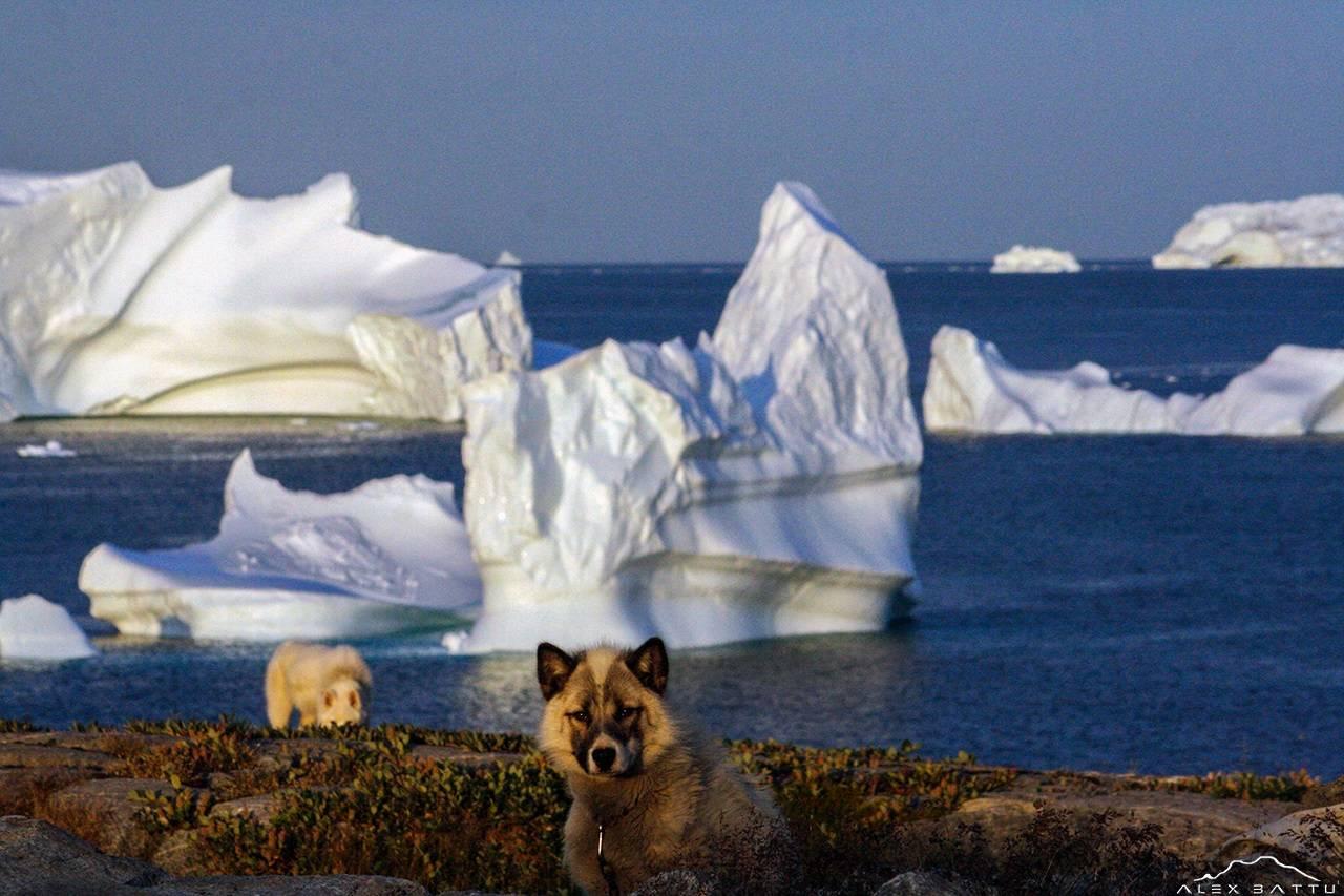 Ilulissat; Greenland;